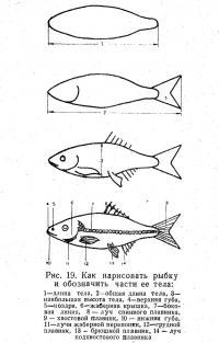 Рис. 19. Как нарисовать рыбку и обозначить части ее тела