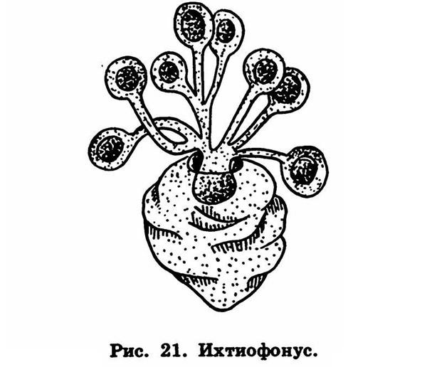 Рис. 21. Ихтиофонус
