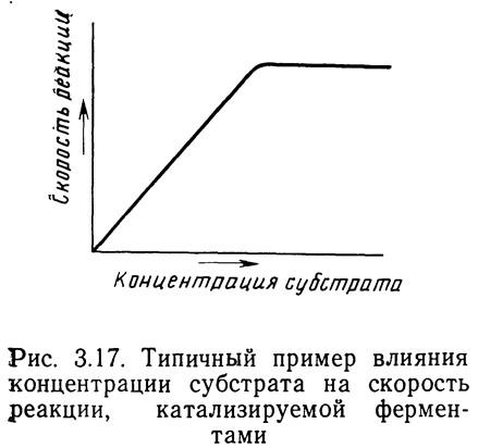 Рис. 3.17. Типичный пример влияния концентрации субстрата на скорость реакции