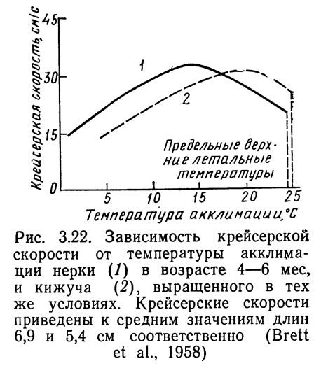 Рис. 3.22. Зависимость крейсерской скорости от температуры акклимации нерки