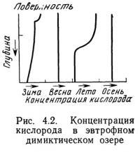 Рис. 4.2. Концентрация кислорода в эвтрофном димиктическом озере