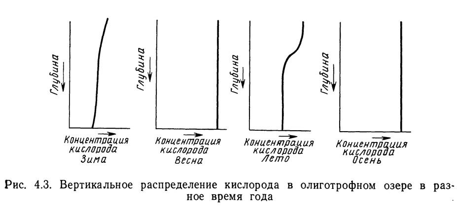 Рис. 4.3. Вертикальное распределение кислорода в олиготрофном озере