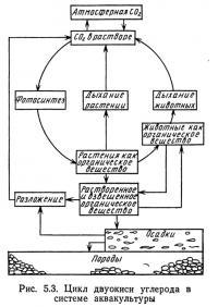 Рис. 5.3. Цикл двуокиси углерода в системе аквакультуры