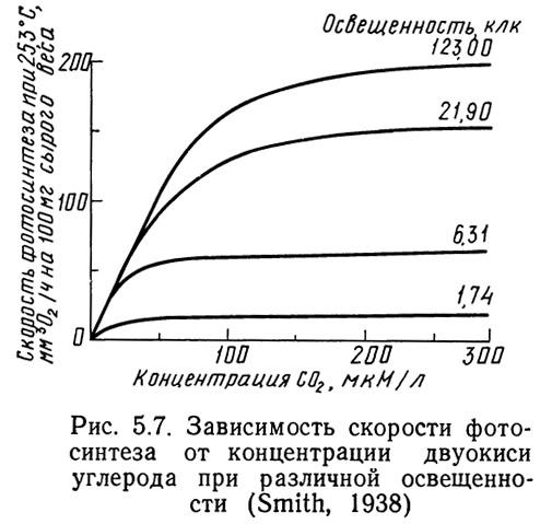 Рис. 5.7. Зависимость скорости фотосинтеза от концентрации двуокиси углерода
