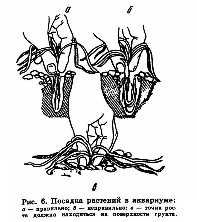 Рис. 6. Посадка растений в аквариуме