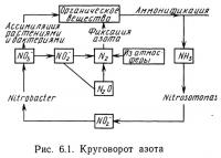Рис. 6.1. Круговорот азота