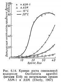 Рис. 6.14. Кривые роста синезеленой водоросли Oscillatoria agardhii (штамм E10)