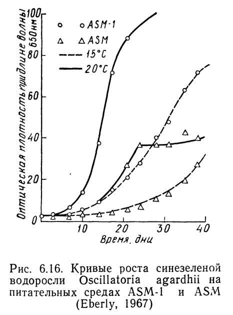 Рис. 6.16. Кривые роста синезеленой водоросли Oscillatoria agardhii