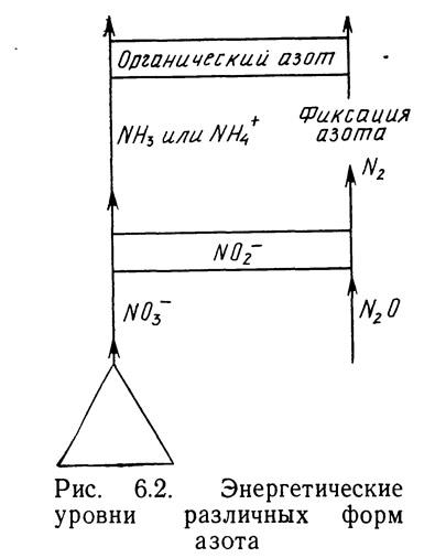 Рис. 6.2. Энергетические уровни различных форм азота