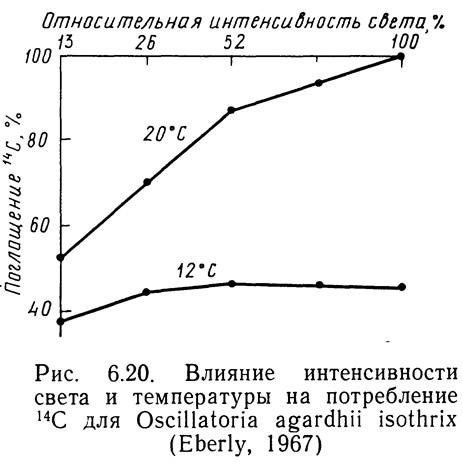 Рис. 6.20. Влияние интенсивности света и температуры на потребление 14С
