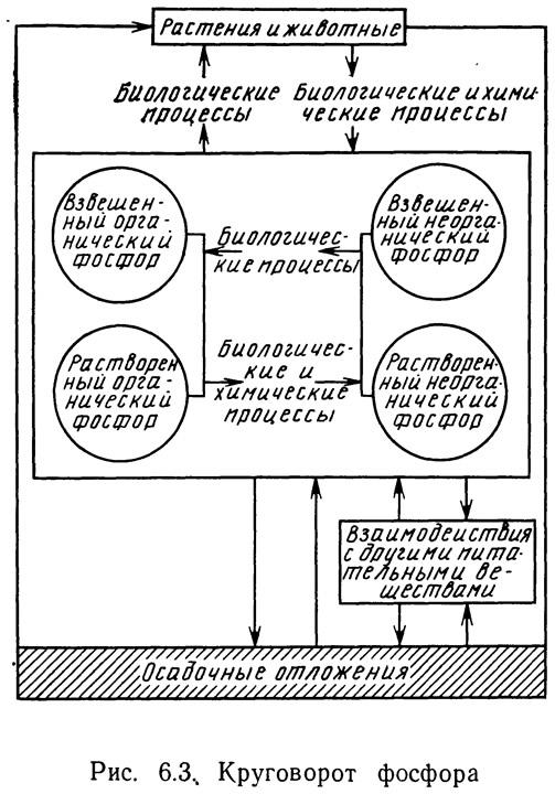 Рис. 6.3.. Круговорот фосфора
