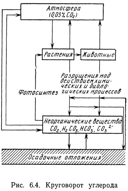 Рис. 6.4. Круговорот углерода