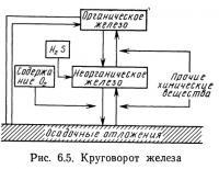 Рис. 6.5. Круговорот железа
