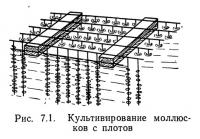 Рис. 7.1. Культивирование моллюсков с плотов