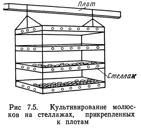 Рис 7.5. Культивирование моллюсков на стеллажах, прикрепленных к плотам