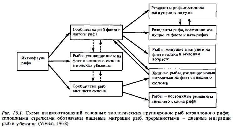 Рис.10.1. Взаимоотношения основных группировок рыб