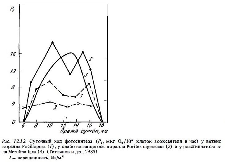 Рис.12.12. Суточный ход фотосинтеза  коралла Pocillopora
