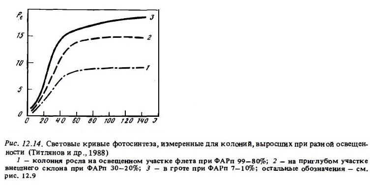 Рис.12.14. Фотосинтез колоний, выросших при разной освещённости