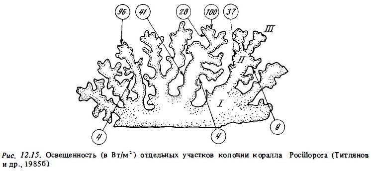 Рис.12.15. Отвещённость участков коралла Pocillopora