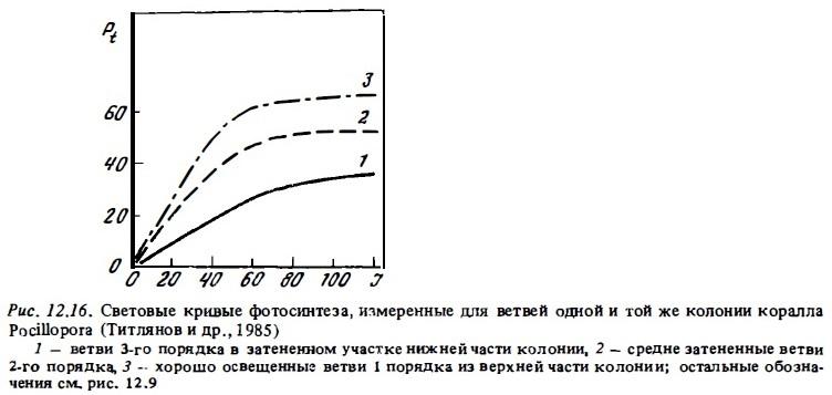Рис.12.16. Световые кривые фотосинтеза