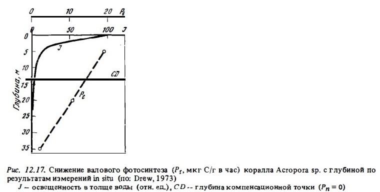 Рис.12.17. Снижение фотосинтеза с глубиной