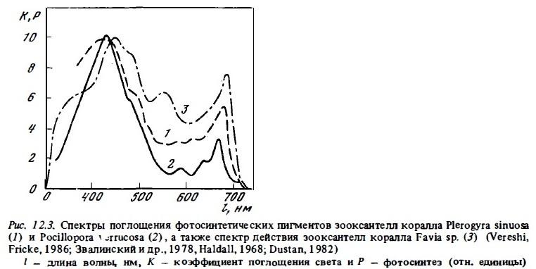 Рис.12.3. Поглащение фотосинтетических пигментов зооксантеллами