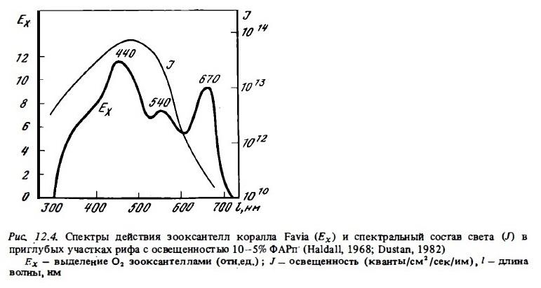 Рис.12.4. Парметры зооксантеллов коралла Favia