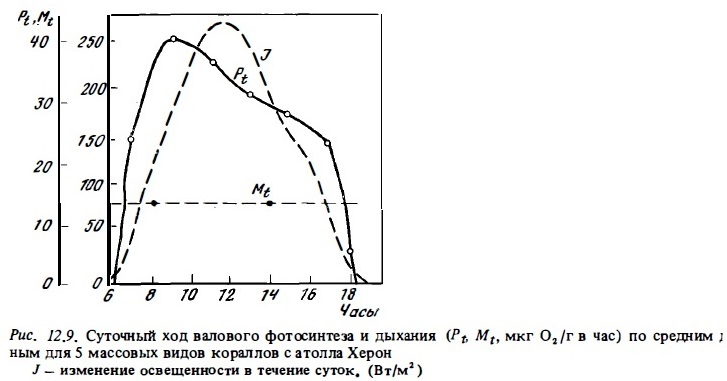 Рис.12.9. Суточный ход валового фотосинтеза