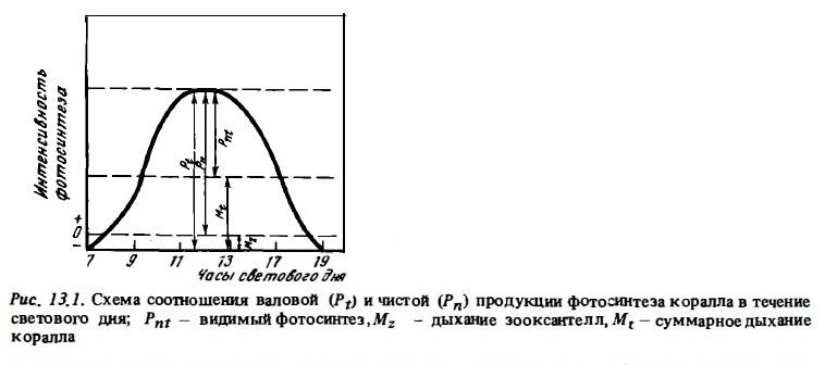Рис.13.1. Валовая и чистая продукция фотосинтеза