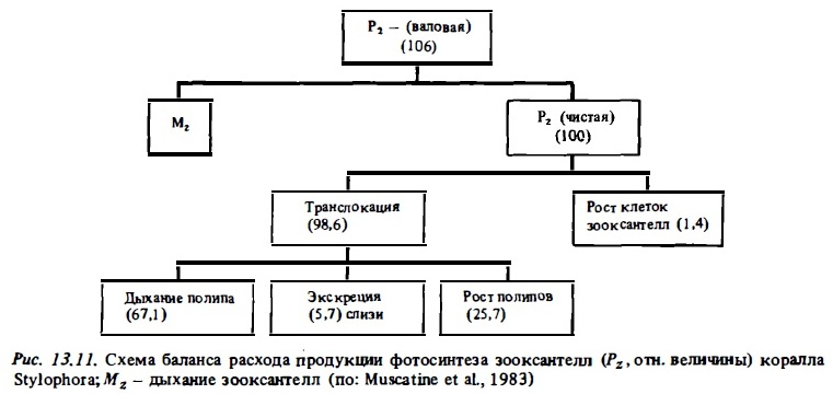 Рис.13.11. Схема баланса расхода пробукции фотосинтеза