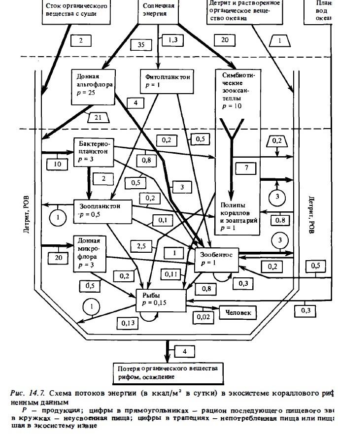 Рис.14.7. Схема потоков энергии в экосистеме