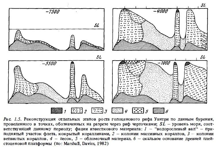 Рис.1.5. Реконструкция этапов роста голоценового рифа
