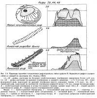 Рис.1.6. (окончание) Строение голоценовых рифов по стадиям эволюции