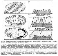 Рис.1.6. (продолжение) Строение голоценовых рифов по стадиям эволюции