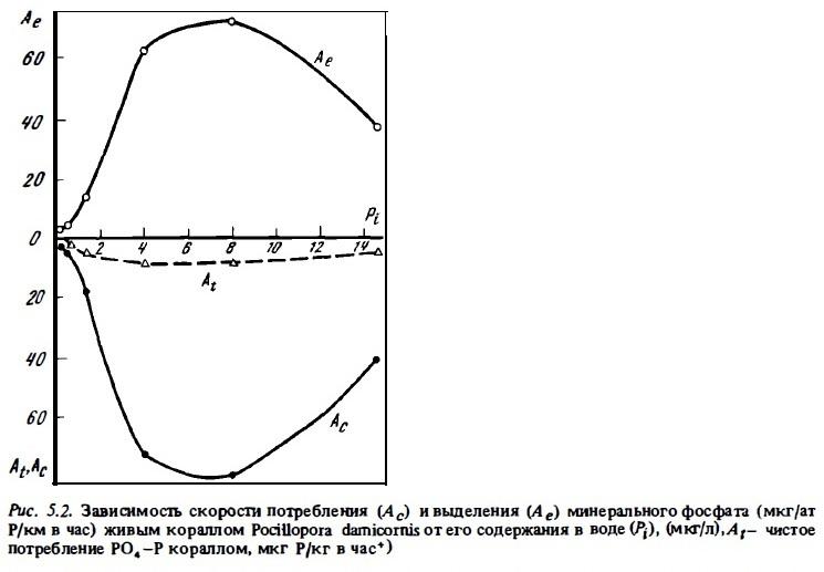 Рис.5.2. Скорость потребления и выделения минерального фосфата