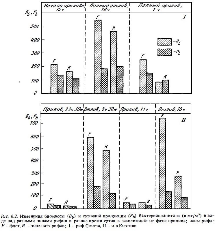 Рис.6.2. Биомасса и продукция бактериопланктона