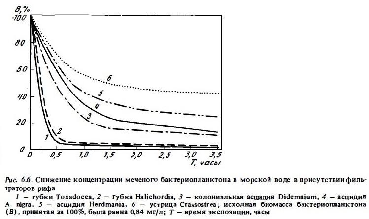 Рис.6.6. Снижение концентрации мечено бактериопланктона