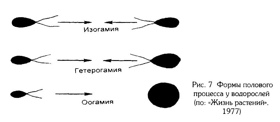 Рис.7. Формы полового процесса водорослей