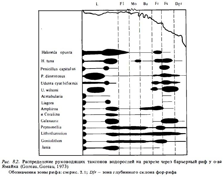 Рис.8.2. Руководящие таксоны водорослей
