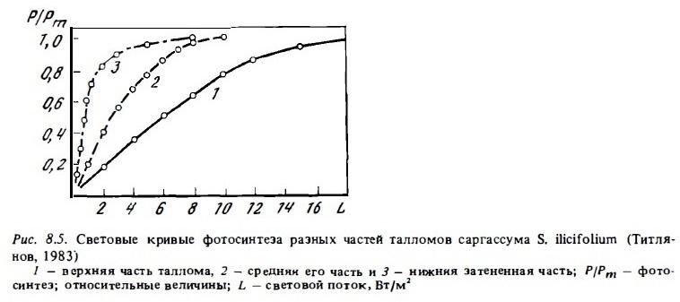Рис.8.5. Фотосинтез частей саргассума