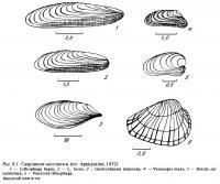 Рис.9.1. Сверлящие моллюски