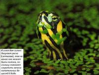 Ряска (Lemnaceae) может быть полезна