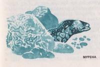 Рыба Мурена