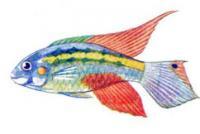 Рыба-попугай (пельматохромис)