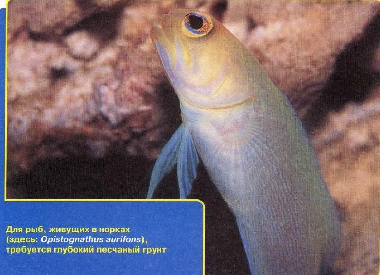 Рыбы, что живут в норах