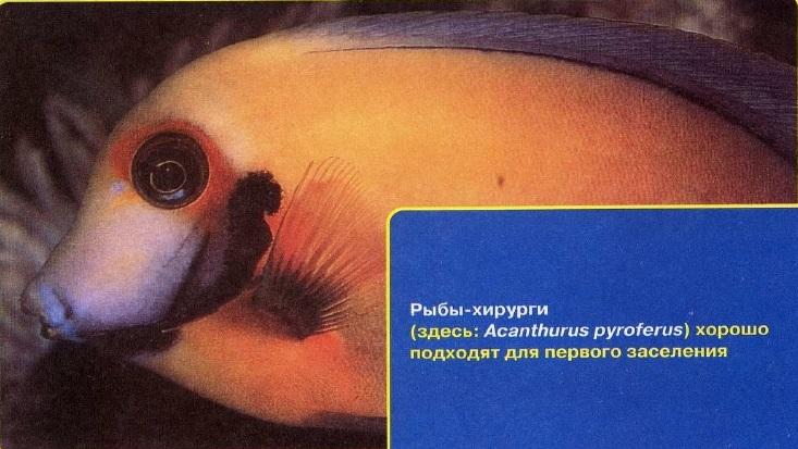 Рыбы-хирурги