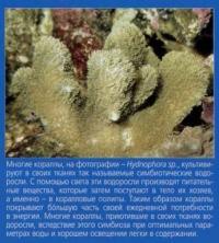 Симбиотические водоросли в кораллах
