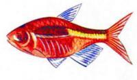 Слепая рыба