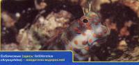 Собачковые рыбы