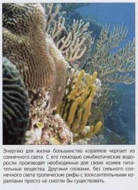 Солнечный свет — основной источник энергии для кораллов